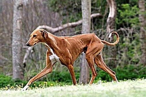 کلیپ های مسابقات سگ دوانی در کجا قابل دسترس است؟